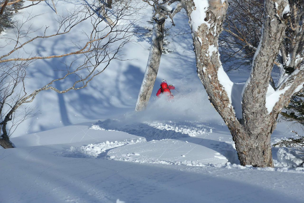 japan powder skiing through the trees